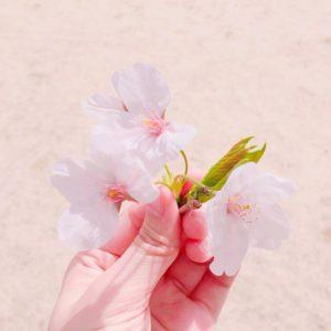 桜‗@exoexossss