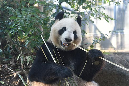Ueno Zoological Gardens