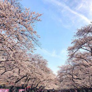 桜R‗@skylu525