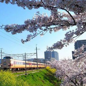 桜‗@hinamazp